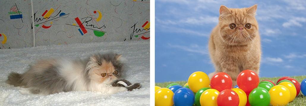 Les chats et le jeux