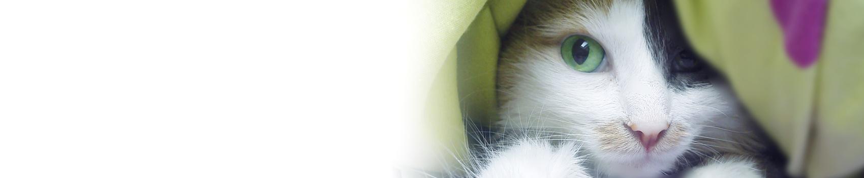 fédération féline française des chats -03