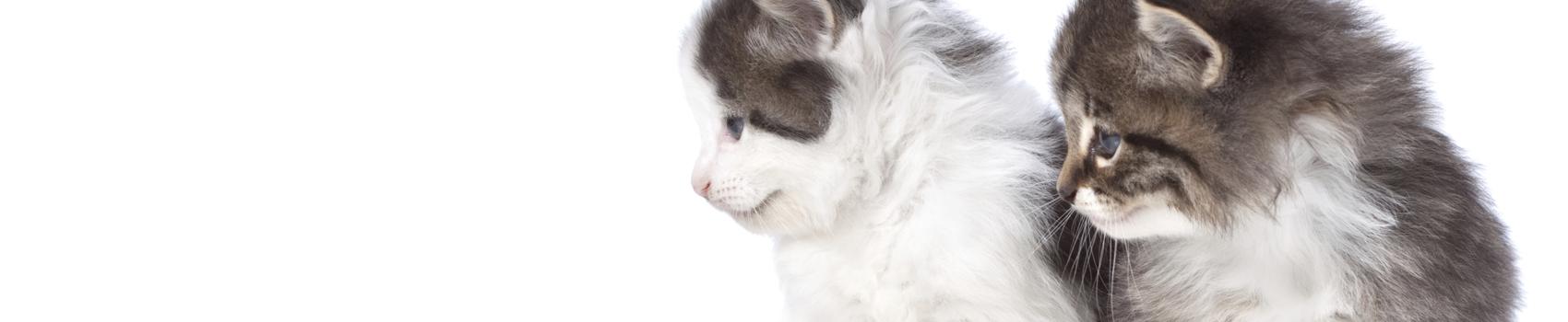 fédération féline française des chats -04